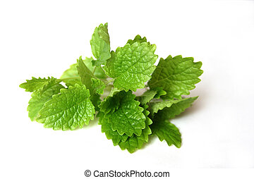 Lemon Balm - a bouquet of lemon balm