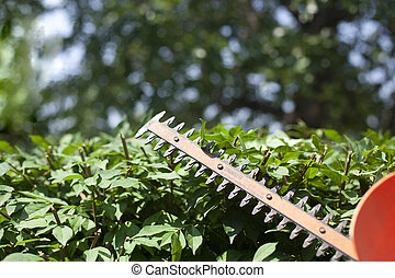Trimming the Bushes - Using a hedge trimmer to trim the...