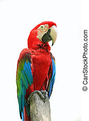 red parrots with blur background