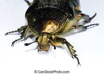 bug in close up