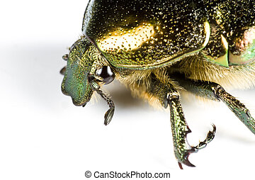 iridescent colorful bug in close up