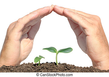 small plant protected hands