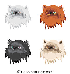 four persian cats on white