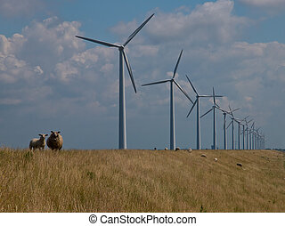 sheep in front of windturbines - Sheep watching from a dike...