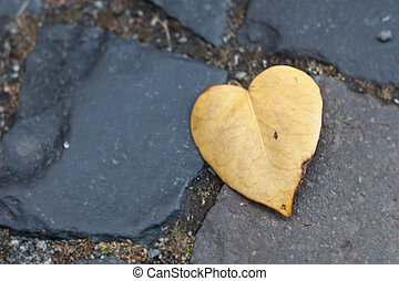 A Heart-shaped Leaf