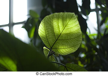 One green leaf - Indoor