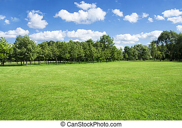 Summer landscape of grass and trees - Background for...