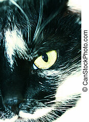 Portrait of a black and white cat