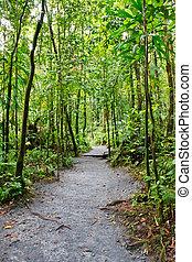 Dirt Path Through Lush Rain Forest