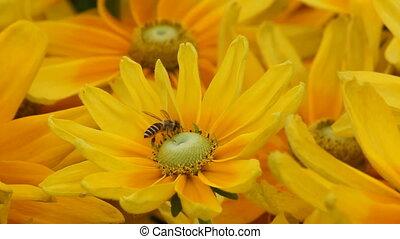flowerbee 3