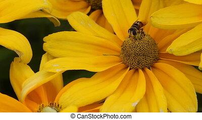 flowerbee 2