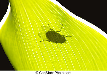 fly in back-light - fly in back light