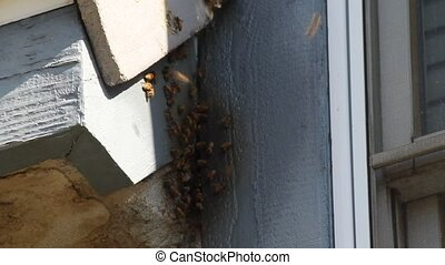 Bee's in house eaves - These Bee's have been living here for...