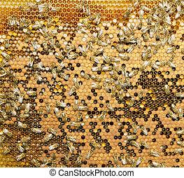 Enjambre, abejas, producto, miel