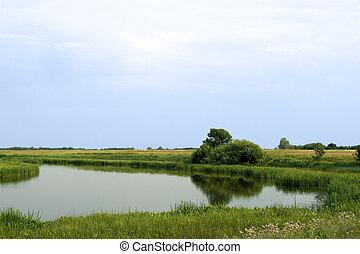 Summer rushy lake panorama view