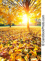秋天, 鮮艷