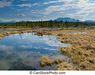 Marshland pond in boreal forest