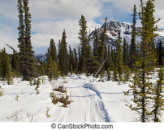 Well used winter trail in boreal forest taiga of Yukon...