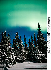 Northern Lights, Aurora borealis and winter forest -...