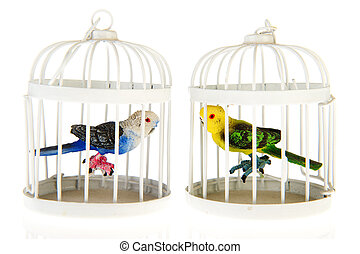 Miniature parrots in cages
