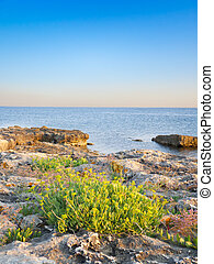 pebble beaches with green plants. landscape
