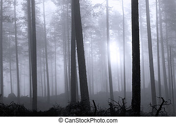 Hazy forest - Hazy blue forest at dawn