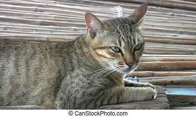 Sleepy Green Eyed Slum Cat - A sleepy green eyed cat wakes...