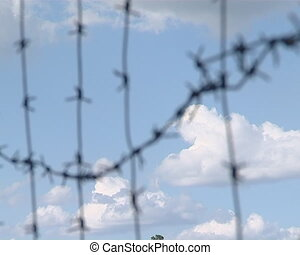Barbed wire. - Sky seen through barbed wire. Fight for...