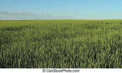 Wind Turbines - Wind turbines in grain field