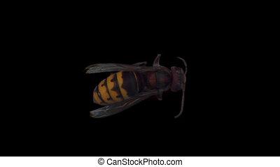 hornet 01 - Isolate hornet with alpha matte