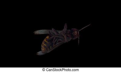hornet 03 - Isolate hornet with alpha matte