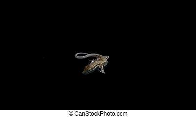 lizard 02 - Isolate lizard with alpha matte