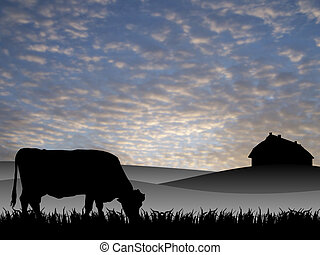 cow on pasture at sunset in summer