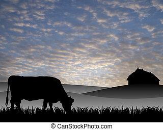 vaca, pasto, pôr do sol, verão
