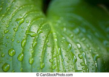 Macro shot of waterdrops on the leaf