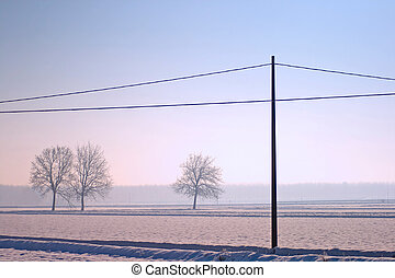 Snowscape - Landscape of snow, trees and a light pole
