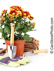 garden plants with flowers roses and equipments