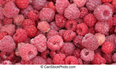 Lot of raspberries yield panning - Closeup of raspberries...
