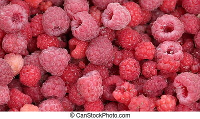Lot of raspberries yield background - Closeup of raspberries...