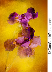 Color explosion - Iris flowers and yellow color powder paint...