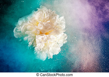 Universe like flowers - Creative shoot of white peony flower...