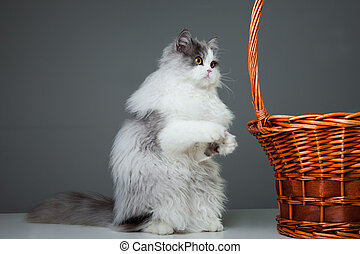 persian cat sitting near basket
