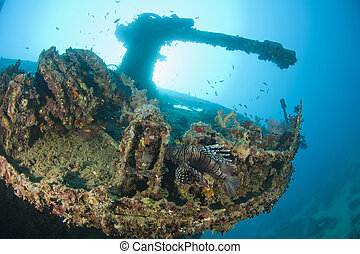 Gun on a the stern of a large shipwreck