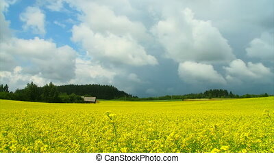 dramatic sky over a field of rapeseed, timelapse