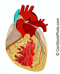 abstract human heart vector illustration