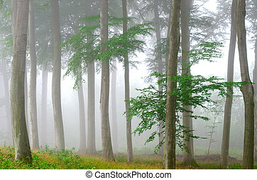 deep forest - a misty forest