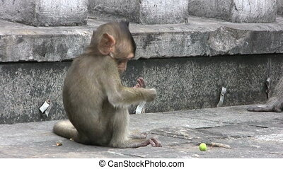 Baby Monkey Protecting His Snacks - A cute little baby...