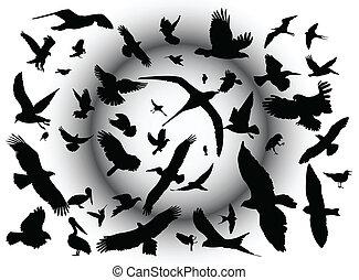 bird - flying bird