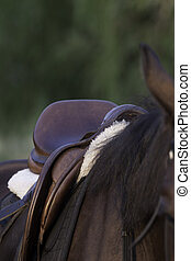 Part of Saddle in a horse