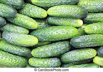 some cucumbers - some fresh cucumbers close up for...